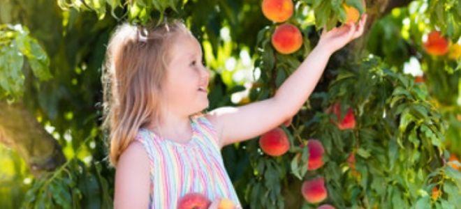 Можно ли детям персики и с какого возраста