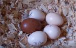 Яйцо как прикорм для грудничка