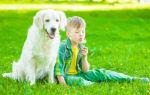 Что делать, если у ребенка аллергия на собаку