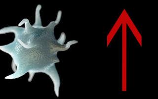 Почему повышены тромбоциты у ребенка и что делать