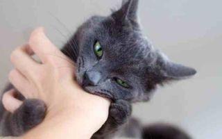 Что делать, если ребенка поцарапал кот