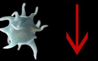 Почему понижаются тромбоциты в крови у ребенка