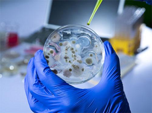 Чашка Петри с ростом микроорганизмов