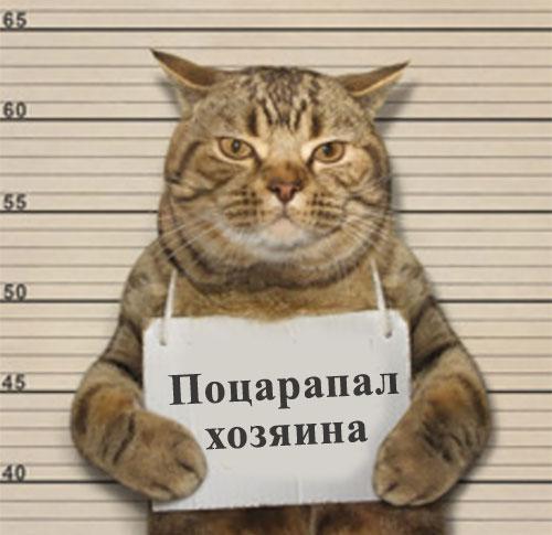 """Арестованный кот с табличкой """"Поцарапал хозяина"""""""