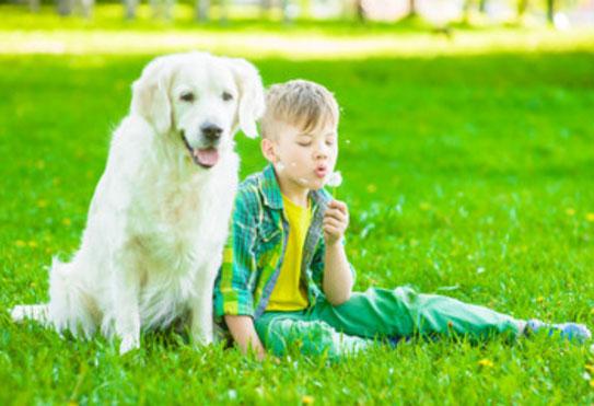 Мальчик сидит рядом с собакой и дует на одуванчик