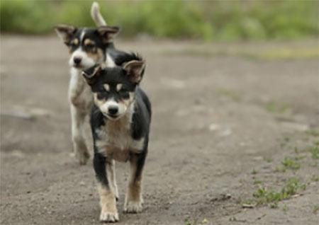 По дороге идут два пса