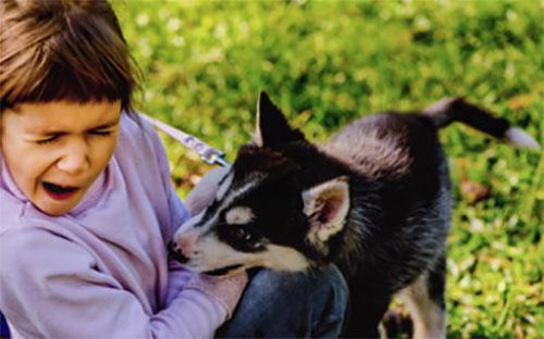 Собака кусает девочку за руку