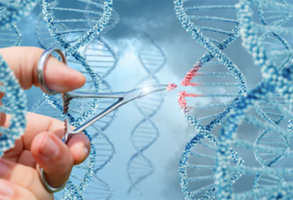 Ножницами чикают цепь ДНК