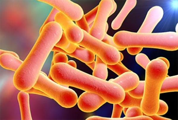 Микроскопическое увеличение коринебактерий