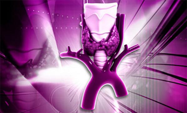 Схематическое изображение части трахеи и щитовидная железа