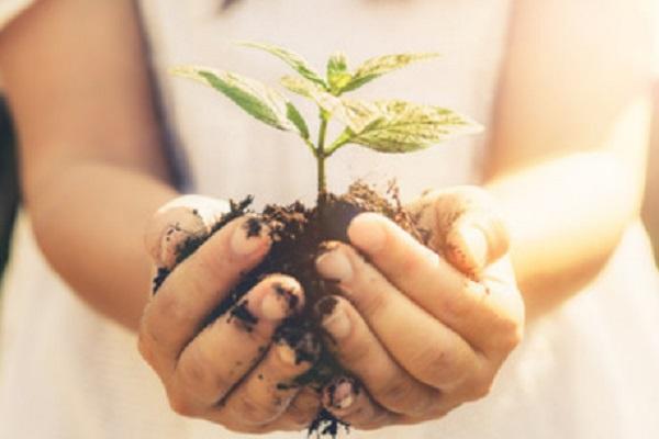 Фото рук девочки, которая держит маленькое растение